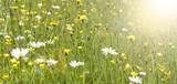 Frühlingswiese mit Sonnenstrahlen - 212420980