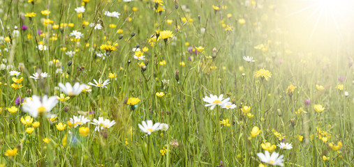 Frühlingswiese mit Sonnenstrahlen © Wolfilser