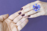 Close up male and female hand touching fingers. A flower of a cornflower on a woman's hand. Purple background.