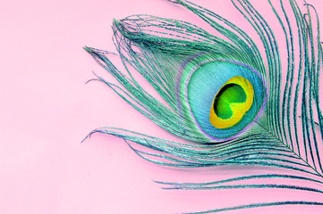 peacock feather over the pink background with copy space