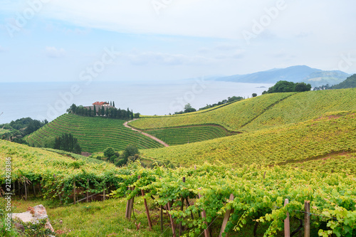 Fotobehang Pistache rolling vineyard landscape at getaria town, located at Basque Country, Spain