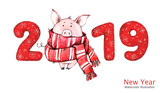 2019 Happy New Year banner. Cute pig in winter scarf with numbers. Watercolor illustration. Symbol of winter holidays. Zodiac sign. Perfect for calendar and celebration card. - 212447330