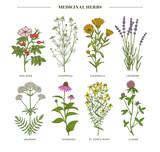 Medicinal herbs. - 212452739
