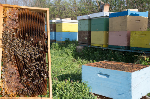 Aluminium Bee Beehive frame with swarm of bees.
