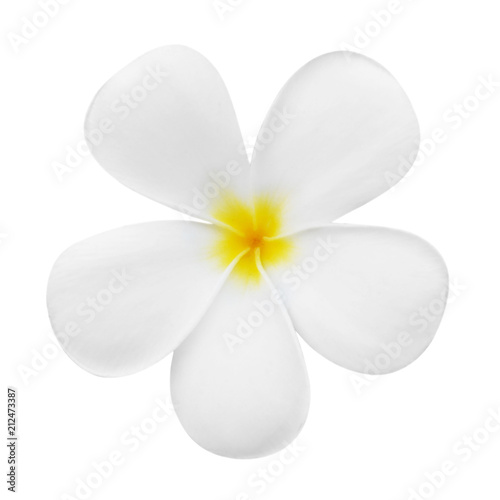 Canvas Plumeria plumeria flower bloom isolated on white