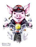 Children illustration. Watercolor grange pig in jacket on motorbike. Funny biker. Transport. Symbol of 2019 year. Perfect for T-shirts, posters, cards, phone cases. - 212483121