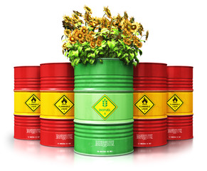 Green biofuel drum with sunflowers in front of red oil or gas barrels isolated on white