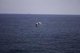 Seagull flying sky - 212497911