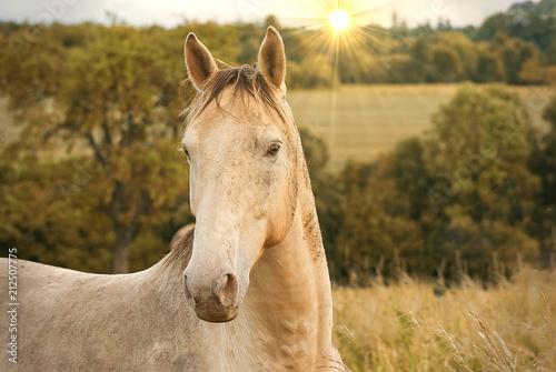 Fotobehang Paarden Portrait of a horse outdoor on a field in summer