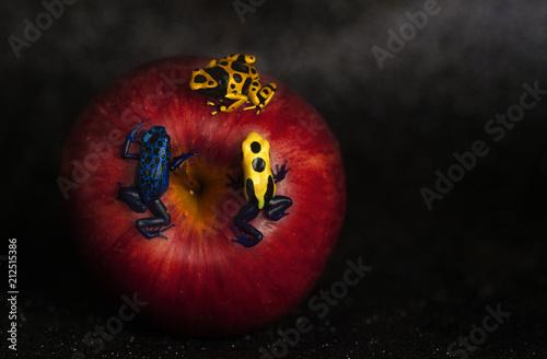 Fotobehang Kikker apple with three dendrobates