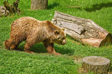 Bear on the Lawn - 212521100