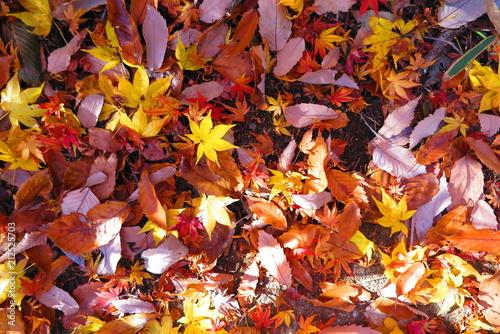 Fotobehang Rood traf. 秋の登山道の風景14