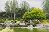 nice rain forest