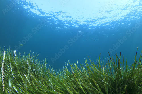 Green grass blue ocean underwater