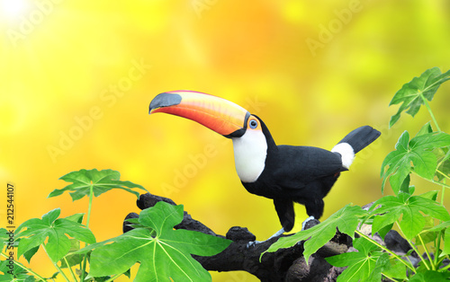 Aluminium Natuur Horizontal banner with beautiful colorful toucan bird