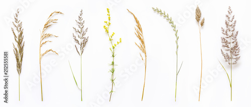 Set of wild ripe herbs grass and twigs, natural field plants, color floral elements, beautiful decorative floral composition isolated on white background, macro, flat lay, top view. - 212555581