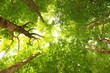 Green forest, view from ground to tree tops - 212561785