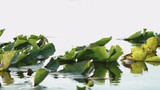 Some Water lillys in the swamp - 212584350