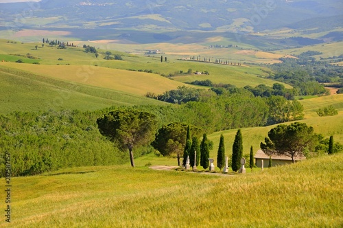Fotobehang Honing Beautiful landscape of hills, cypress trees and houses in Tuscany, Italy