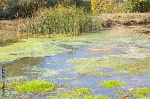 Aluminium Lime groen swamp background