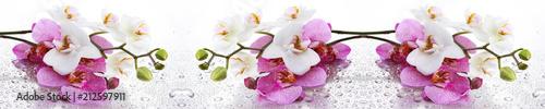 Beyaz ve Pembe Orkide Panoramik - 212597911