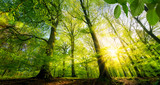 Sonne scheint durch grüne Laubbäume im Wald © Smileus