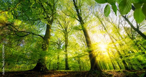 Sticker Sonne scheint durch grüne Laubbäume im Wald