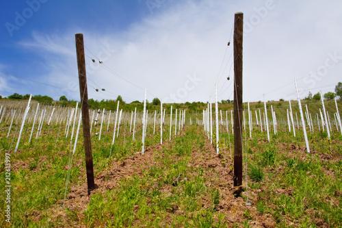 Aluminium Wijngaard aufgestellte Metallpfosten für einen neuen Weinberg