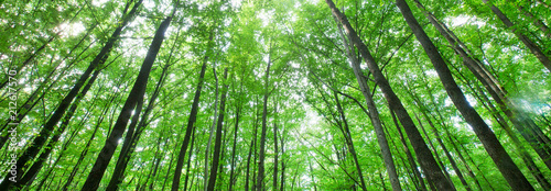 forest trees. nature green wood sunlight backgrounds - 212617570