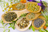 Alternative Medicine. Herbal Therapy. Fresh and dried herbs. - 212620967