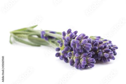 Lavender flowers - 212621560