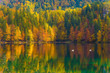 Scenic reflections of multicolored forests