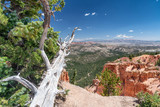 Tree trunk pointing towards Bryce Canyon landscape - 212625323
