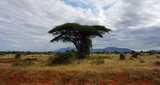 natural green landscape in kenya © chriss73