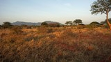 impala in kenya - 212626315