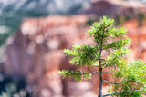 Small pine tree with mountain landscape in background - 212634141