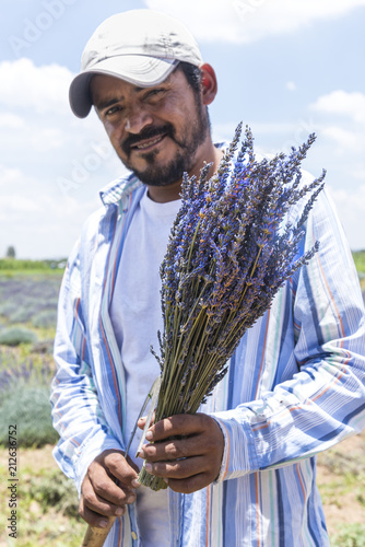 Fototapeta Mexican farmer with Lavender bunch Portrait of a proud farmer with his recently cropped Lavender flowers
