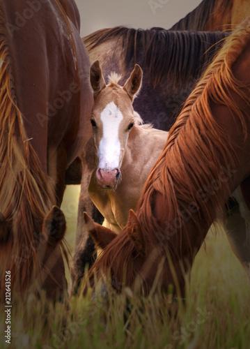 Fotobehang Paarden Curiosity