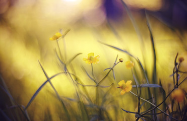 Abstract background with yellow buttercups.