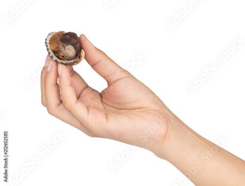 dłoń trzymająca pyszne gotowane lub gotowane na parze małże na białym tle