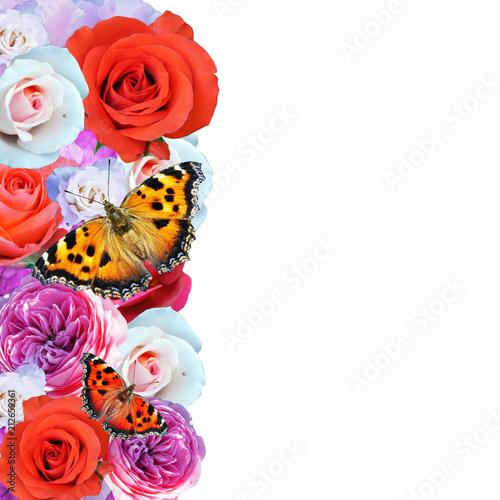 set of beautiful roses, flowers, isolated on a white