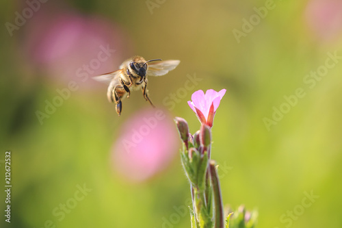 Aluminium Natuur Honey bee insect pollination