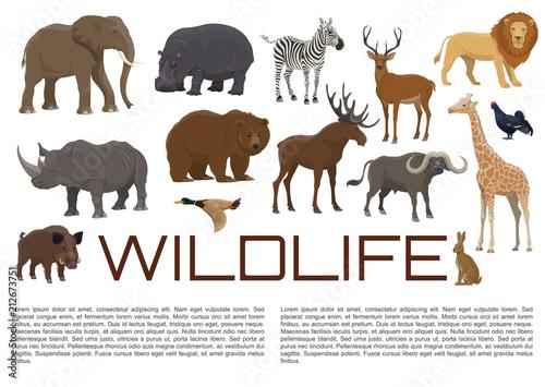 Obraz na płótnie Vector wildlife poster of wild animals