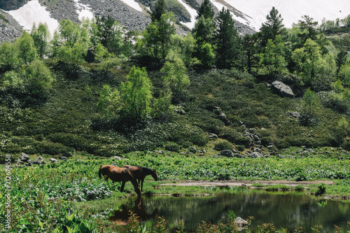Plexiglas Khaki Beautiful nature landscape of mountains with snow and green forest. Horses are drinking water
