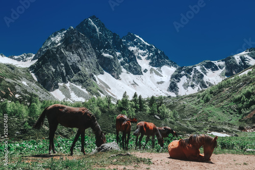 Fotobehang Paarden Horses near mountains with snow. Beautiful nature landscape green forest
