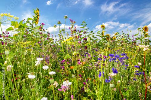 Lato pole z kolorowymi kwiatami