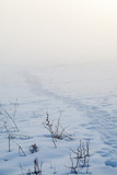 Countryside winter landscape at sunset - 212679567
