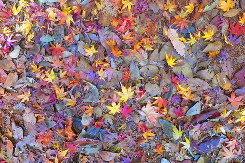 Fotobehang Lavendel 紅葉の登山道の風景23