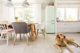 Dog lying on the floor in real photo dining room and kitchen int - 212721395