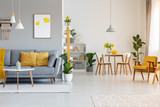 Poster above grey sofa with yellow cushions in open space interior with chairs at dining table. Real photo